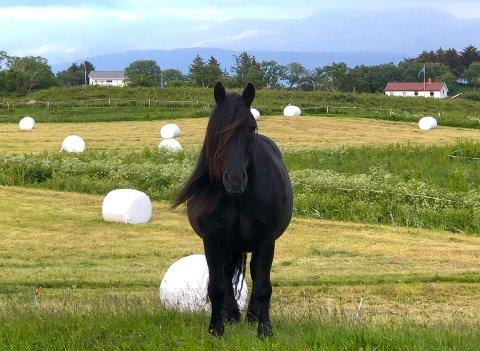 Det er foreløpig påvist kverke i hestehold i Tjeldsund, Kvæfjord og Trøgstad, og prøver fra flere hester med symptomer er under analyse. Illustrasjonsbilde: Beate Nygård Johansson
