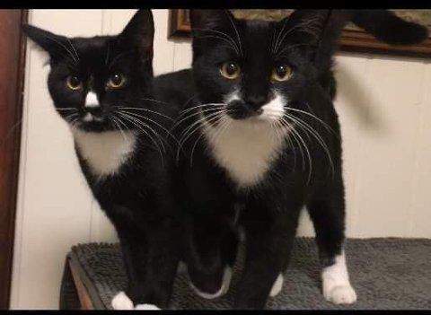 KATTUNGER: Redd Dyra Telemark opplever en stor pågang av eierløse kattunger.