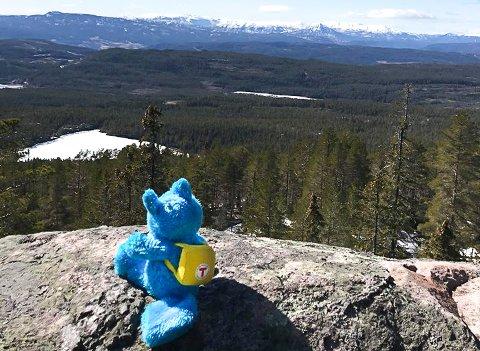 TURBO PÅ TUR: Turlagsreven Turbo er stadig på tur i skog og på fjell. Nå håper han småbarnsfamiliene finner turkodene hans.