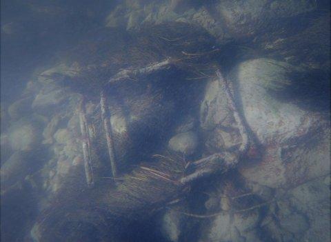 STOL: Eieren av campingstolen kastet stolen og ikke snøret uti Surna ....