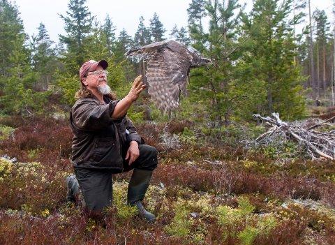 Seniorforsker Jørund Rolstad med en hønsehauk. Forskere har plassert en GPS-sporer i en slags ryggsekk på hauken.