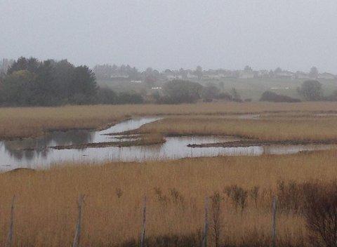 POPLÆRT OGSÅ FOR MINKEN: I august 2015 åpnet klima- og miljøministeren Slevdalsvannet naturreservat. Det er ikke bare fuglene som trives godt i reservatet.  Minken forsyner seg grovt av fugleegg og fugleunger.