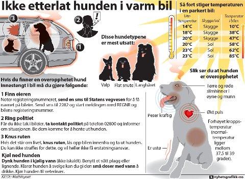 Hvis du finner en overopphetet hund innestengt i bil må du gjøre følgende. (Nyhetsgrafikk)