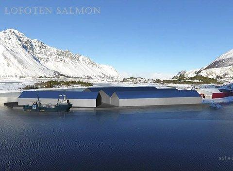 Satser: Håkon Solberg satser sammen med Richard Rongsøy i Lofoten Salmon AS på landbasert oppdrett på Kleppstad.