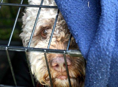 PÅ TUR: Mange er bekymret for hundene sine om dagen.