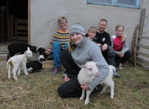I KARANTENE:  Eirill  (foran), Hilde, Ådne, Kristoffer og Ine  har god tid til å stelle og kose med fem små kopplam mens hele familien Hammerås Müller er i karantene hjemme på gården.