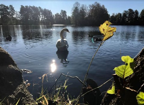 HØSTIDYLL: Sola varmet i Bugården mandag, men nå kan vi vente oss litt mer rufsete vær framover.