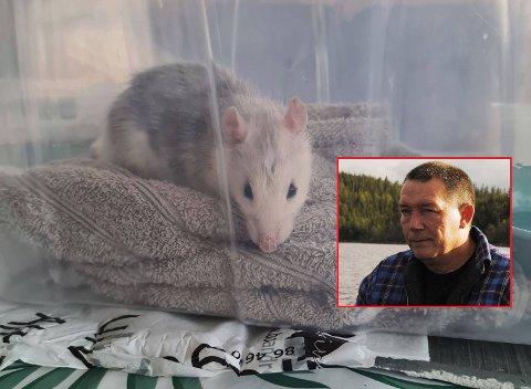 SØKTE TILFLUKT: Ted van der weck fikk seg en støkk da kona plutselig begynte å hyle etter at en rotte kom pilende inn i stua deres onsdag kveld.