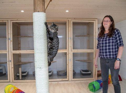 NYÅPNING: Eli Myrmel Haukås og familien har startet kattehotell på Haukås. Katten Ulrikke tester ut aktivitetstilbudet før åpning.FOTO: EIRIK HAGESÆTER