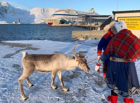 """INNLEID: Et reinsdyr var på plass for å møte turister som kom med cruiseskipet """"AIDAcara"""" Det tok en stund før det klarte å roe seg ned."""