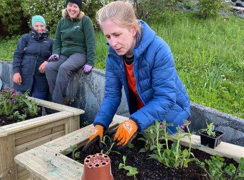 HAGELIV: Linda Christoffersen plantar og sår i dei nye humlebeda langs med Storevatnet.
