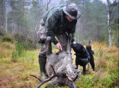 Illustrasjonsbilde frå arkivet. Hjortejakt på Tveit, nær Utåker.