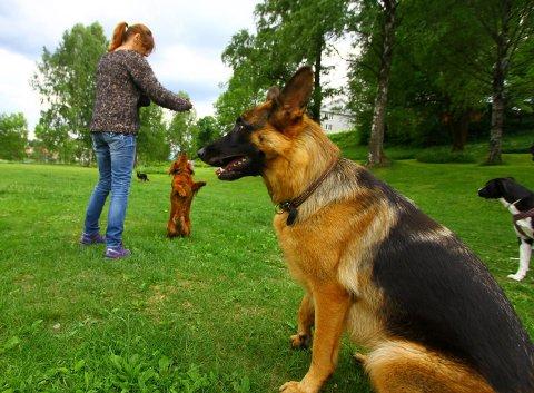 MØTEPLASS: Hundeeiere møtes av til på Kvarten sammen med sine firbeinte venner. Nå kan de få et eget inngjerdet område.