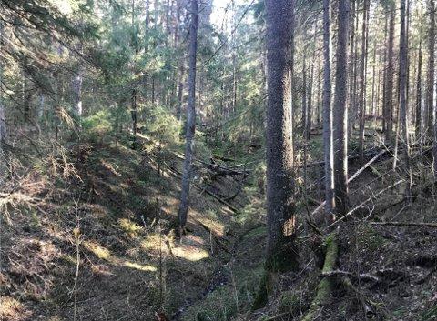 PÅ GRENSA MOT BUSKERUD: Regjeringen har nå vedtatt at Lågabakken ved Lågen, helt nord i Larvik, blir verneområde på grunn av helt spesielle skogforhold.
