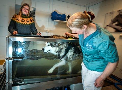 Ved Mo dyreklinikk tilbyr Sabine Dehof behandling for dyr på vanntredemølle. I dag er det Alaskan Malamuten Frost på snart seks år som får gåturen på mølla mens matmor Heidi Helgaker Johansen følger med.