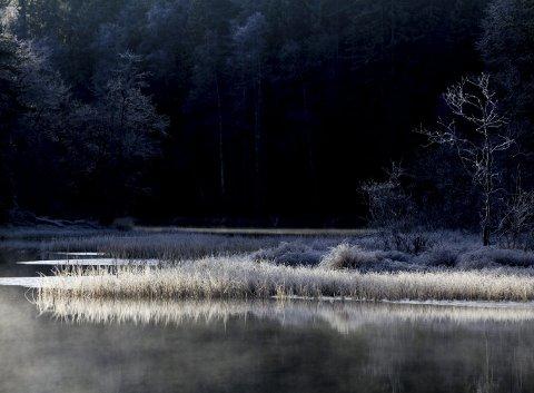 Høsten er favorittårstid for mange fotografer. Farger, frost, tåke, motlys, skygger, kontraster. Mulighetene for fine motiver er mange. FOTO: Tom Gustavsen