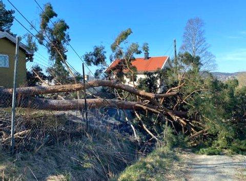 Her henger treet over strømledningene. Foto: RB-TIPSER
