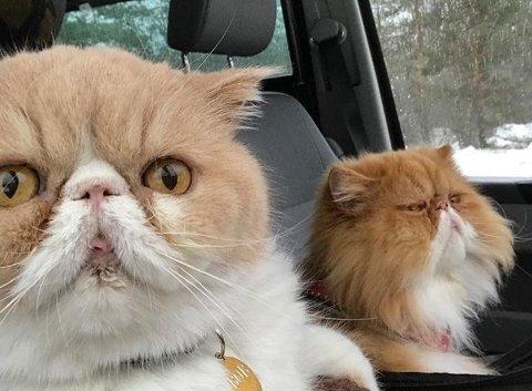 BILSELFIE: Bob (til venstre) hater å kjøre bil. Oscar elsker det.