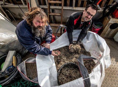 Store mengder. Thomas Warren Eriksen (til høyre) og Christian Hellqvist samlet inn hele 130 kilo plastkuler på et par timer på Tjeldholmen ved Mærrapanna i slutten av mars.
