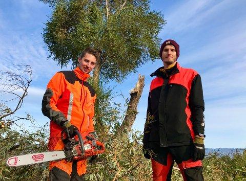 STOR JOBB: - Det er en stor jobb bare å få fjernet den stammen gikk i bakken, forklarer Robin Holmvaag og Tobias Drillestad.