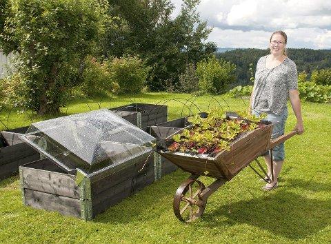 Randi Oddens jordbærplanter frister tilværelsen i en gammel trillebår. Hun ser fram til å få dem opp i sine nye pallekarmer.