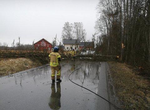 RYKKET UT: Her må brannvesenet trå til med å fjerne et tre som hadde blåst over veien langs Nedrevegen mellom Årnes og Haga torsdag ettermiddag.