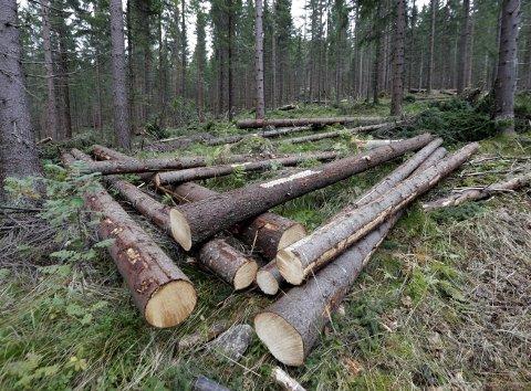 «I debatten om skogvern her hjemme synes man å glemme alle de andre miljøhensynene skogbruket tar - på hele skogarealet. Praktisk talt alt tømmer som hogges i Norge er miljøsertifisert, og skogbruket kartlegger og tar vare på arealer som er viktige for sjeldne arter», skriver Hans Asbjørn Sørlie, rådgiver i Norges Skogeierforbund, i dette innlegget. (Foto: Vidar Ruud, NTB Scanpix)