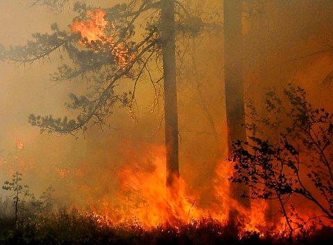 lang tid: Skulle det begynne å brenne for eksempel i Tuddal, vil det gå svært lang tid før brannmannskaper dukker opp, advarer Audun Darrud i Hjartdal Røde Kors. (bildet er fra en øvelse på Breistul )