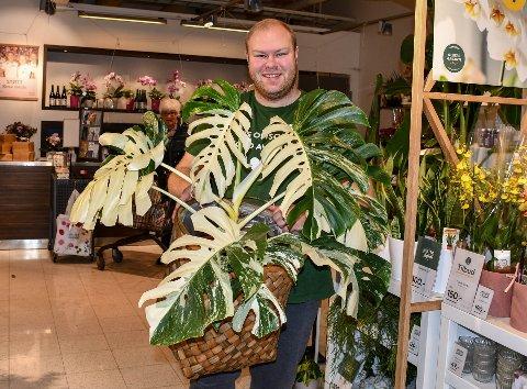 PLANTE: Stian Johannessen, butikkleder i Mester Grønn på Tolvsrød har tatt inn en Monstera Variegata med en prislapp på 10.000 kroner.