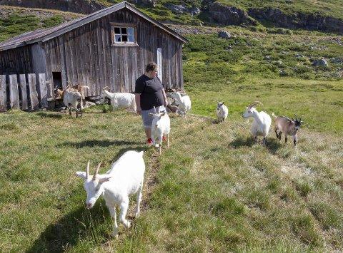 TIL SETERS: Siw trives på Tvist seter sammen med geitene. Det gir ro og fred i sjela, mener hun.