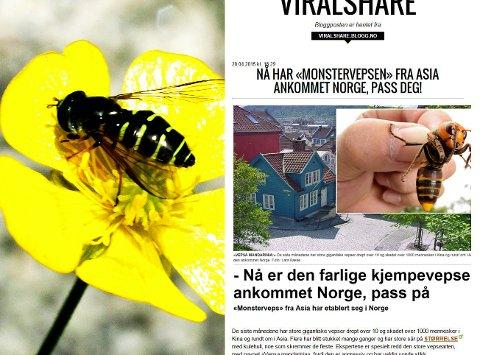KJMEMPEVEPS: Et innlegg om en stor vespetype som skulle være på vei til Norge har blitt mye delt på nettet. Nå kommer det frem at innlegget bare er tull. Fotoet til venstre er av en vanlig veps. Foto: NTB/faksmile Viralshare