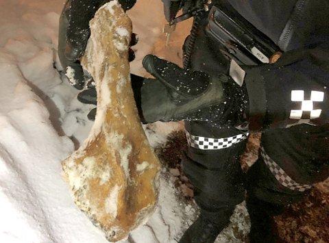 FANT BEIN: Politiet ble varslet da dette beinet dukket opp under gravearbeid på Elverhøy. Nå foreligger konklusjonen.