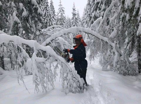 RYDDER: Snøen har lavet ned i store, tunge mengder, og Rolf Kvifte er blant dem som sørger for å rydde løyper for trær som ligger over traseene.