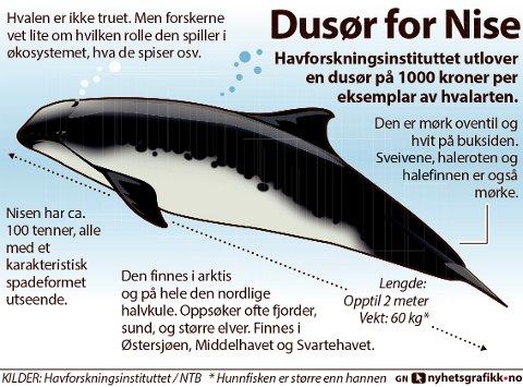 Havforskningsinstituttet utlover en dusør på 1000 kroner per eksemplar av hvalarten.
