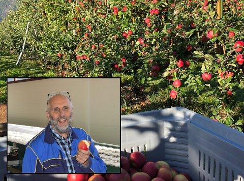 Fruktlagerinspektør Leif Øie arbeider for Grøntprodusentenes samarbeidsråd. Arkivfoto: Mette Bleken (innfelt) og Eli Lund