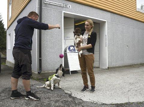 Raymond Njøten og Isabell Befring Njøten har syv hunder, som blant annet er trent til å lete etter bomber og veggdyr. Nå har de også åpnet hundebutikk på Manger kai. Foto: Vibeke Blich