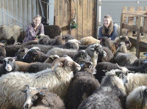 Kortreist mat: Regina Brajkovic og Nora Skarre Abrahamsen sammen med lam som skal bli til «kortreist mat».