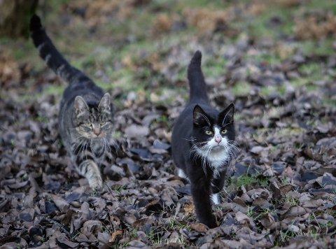 HVA SKJER?: Mandag ble seks katter fanget inn av Moss og Omegn Dyrebeskyttelse. Eier du noen av kattene du ser på bildene så ta kontakt med Moss og Omegn Dyrebeskyttelse. Her er to av kattene svært nysgjerrige på menneskene som dukket opp mandag.