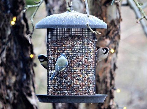 Er det flere lokalbeboere som savner småfuglene på Nordstrand?