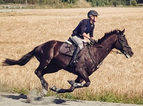 """Glimt fra arranementet """"Hest på Toten"""" på Toten landbane sist helg."""
