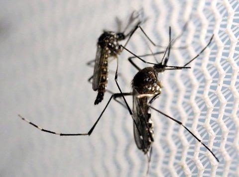 Myggen liker seg godt på Romerike