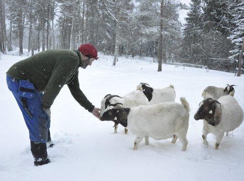Godbit: Geir og Thale Hoff har omtrent 100 boergeiter. Mot en liten godbit tar de seg gjerne en tur ut i snøen for fotografering.