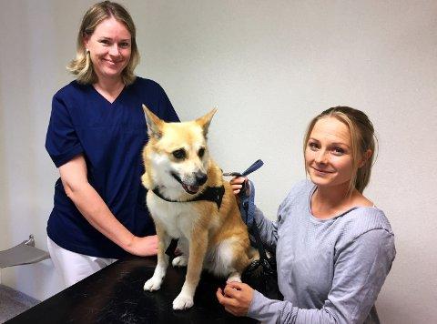 NY EIER: Vestfold Dyrehospital har fått ny eier. På bildet Lina Johansen med hunden Kira, sammen med klinikkens veterinær, Ida Lewsley.