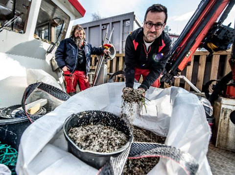 LANGS HELE KYSTEN: Thomas Warren Eriksen (t.h)og Christian Hellqvist i Skjærgårdstjenesten har funnet bittesmå plastpellets langs store deler av Fredrikstad- og Hvalerkysten.