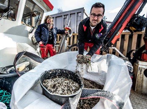 STORT OMFANG: Christian Hellqvist (til venstre) og Thomas Warren Eriksen fra Skjærgårdstjenesten fotografert med noe av de bittesmå plastkulene i mars. De anslo at det kunne dreie seg om en milliard pellets.