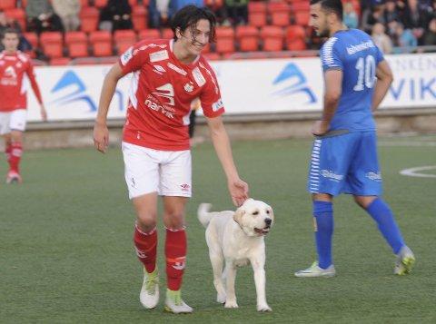 Nå er det ikke lengre tillatt å ta med hund eller andre dyr på Narvik Stadion.