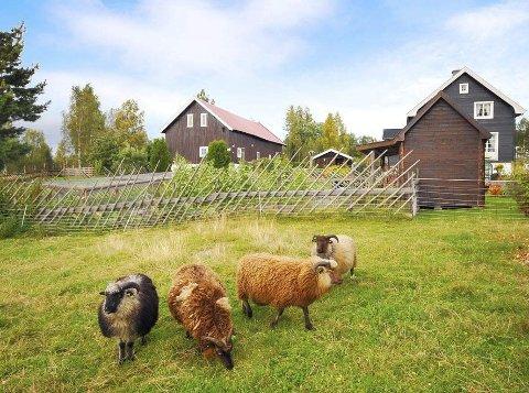 SOLGT: Fire budgivere bidro til at dette småbruket i Moen ble solgt for 450.000 over prisantydning. Begge foto: Eiendomsmegler 1