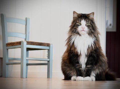 Ukontrollerte kolonier og flere vanskjøttede, hjemløse katter er noen av Dyrebeskyttelsens bekymringer dersom kattebestanden ikke går ned.