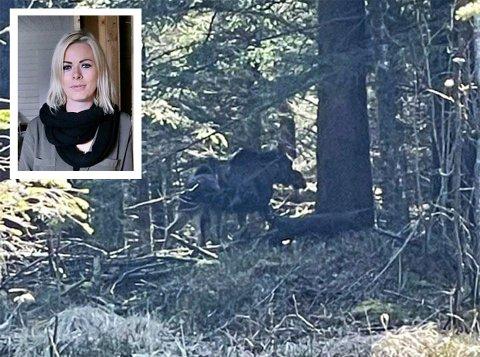 Siri Bjørnevoll kvapp til da to elger plutselig oppsøkte hennes retning i Melshei.
