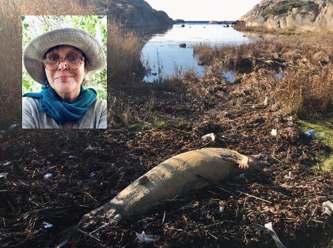 DØD: Nina Grønneberg Andresen var vitne til at denne stakkars skapning ble skylt i land i en bukt på Tjøme.